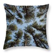 Towering White Pines Throw Pillow