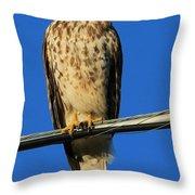 Traffic Hawk Throw Pillow