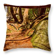 Trail In A Forest, Muskoka, Ontario Throw Pillow