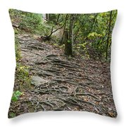 Trail Of Roots Throw Pillow