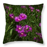 Trailing Ice Plant Throw Pillow