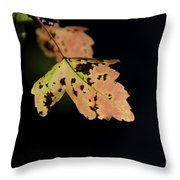 Translucent Maple Leaf Throw Pillow