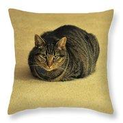 Trav Throw Pillow