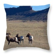 Traveling Band Throw Pillow
