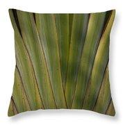 Traveller's Palm Patterns Dthb1542 Throw Pillow