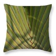 Traveller's Palm Patterns Dthb1543 Throw Pillow