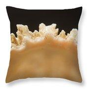 Treasures Of The Ocean 1 Throw Pillow