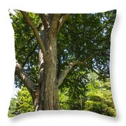 Tree At Msu Throw Pillow