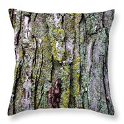 Tree Bark Detail Study Throw Pillow by Design Turnpike