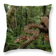 Tree Boa Throw Pillow by Francesco Tomasinelli