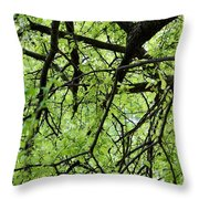 Tree Branches  Throw Pillow