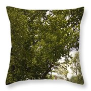 Tree Covered Throw Pillow