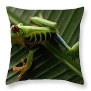 Tree Frog 16 Throw Pillow