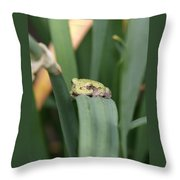 Tree Frog Up Close Throw Pillow