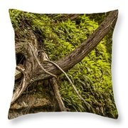 Tree Grows From Rock Outcrop Throw Pillow