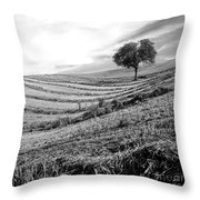 Tree In A Mowed Field. Auvergne. France Throw Pillow