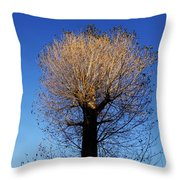 Tree In Afternoon Sunlight Throw Pillow