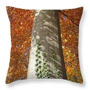 Tree In Autumn Throw Pillow