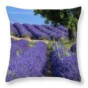 Tree In Lavender Throw Pillow