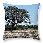 Tree In Plowed Field Throw Pillow