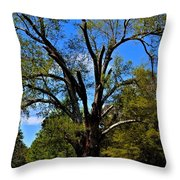 Tree In Rock Hill Throw Pillow