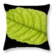 Tree Leaf Throw Pillow
