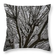Tree Limb 4 Throw Pillow