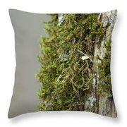Tree Moss Closeup 2013 Throw Pillow