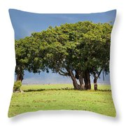Tree On Savannah. Ngorongoro In Tanzania Throw Pillow