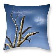 Tree Pointer Throw Pillow
