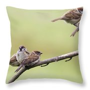 Tree Sparrows Throw Pillow