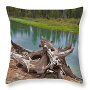 Tree Stump In Des Chutes Nf-or Throw Pillow
