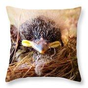 Tree Swallow Fledglings Throw Pillow