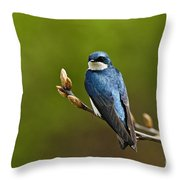 Tree Swallow Pictures 27 Throw Pillow