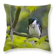 Tree Swallow Pictures 39 Throw Pillow