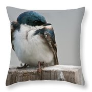 Tree Swallow Pictures 47 Throw Pillow