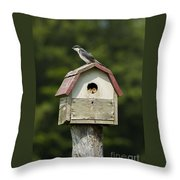 Tree Swallow With Young Throw Pillow