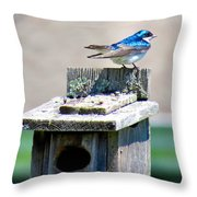 Tree Swallows Throw Pillow
