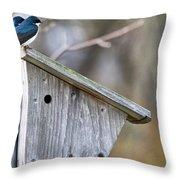 Tree Swallows On Birdhouse Throw Pillow