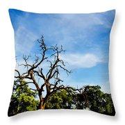 Tree Timestack Throw Pillow