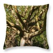 Tree Trunk And Limbs Throw Pillow