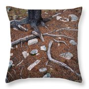 Tree Trunk Roots And Rocks Throw Pillow