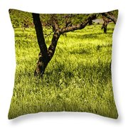 Tree Trunks In A Peach Orchard Throw Pillow