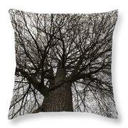 Tree Web Throw Pillow