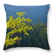 Tree With Yellow Leaves In Acadia National Park Throw Pillow