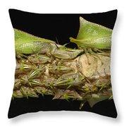 Treehoppers And Nymphs Mindo Ecuador Throw Pillow