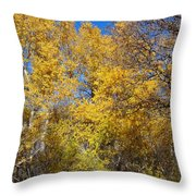 Trees Of Color Throw Pillow