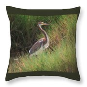 Tri-color Heron Throw Pillow