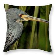 Tri-colored Heron  Throw Pillow