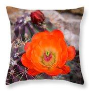 Trichocereus Cactus Flower  Throw Pillow